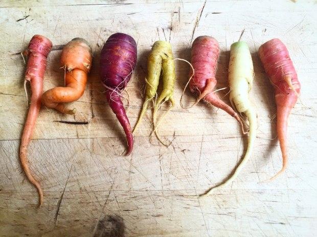 root-vegetable